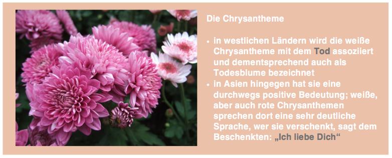 Die Chrysantheme
