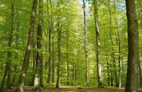 Waldbestattung Cremlinger Horn