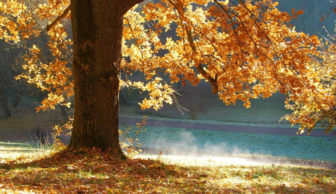 Herbstbaum-am-See