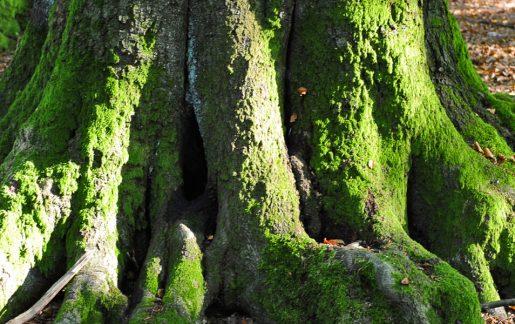 Waldbestattung & Baumbestattung in Deutschland – Kosten & Ablauf