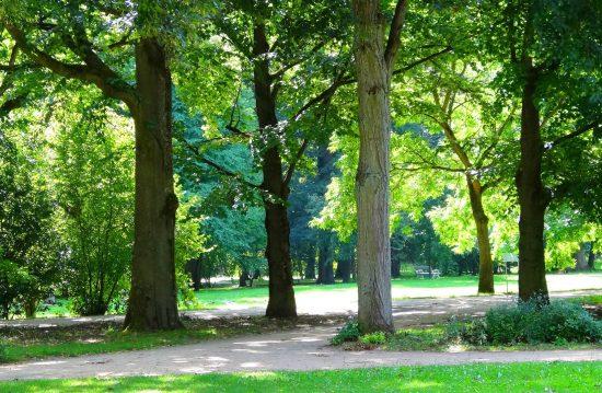 Städtische Friedhöfe von Gladbeck / Allgemeine Friedhofsverwaltung