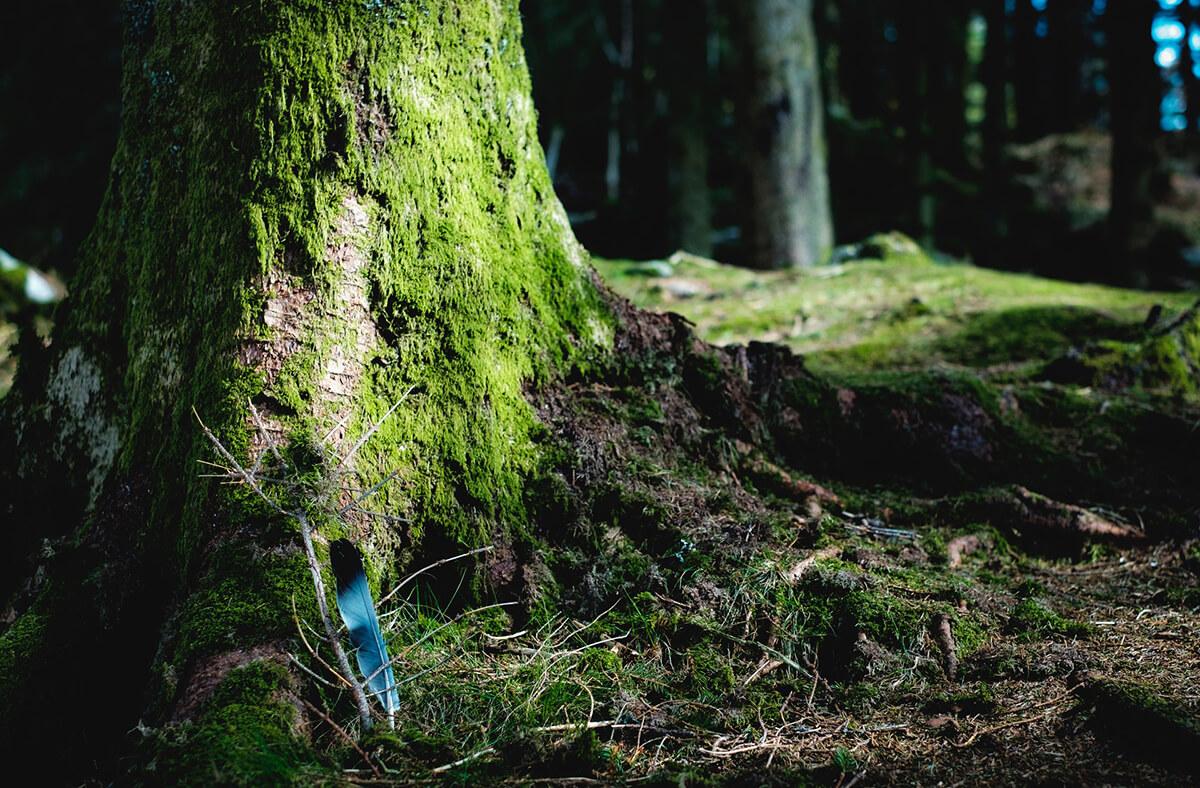 Waldbestattung als günstigere Bestattungsart
